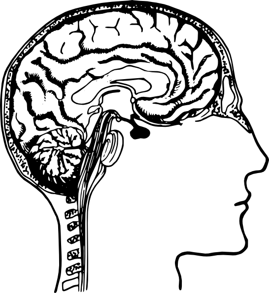 Brain Diagram Clip Art at Clker.com.
