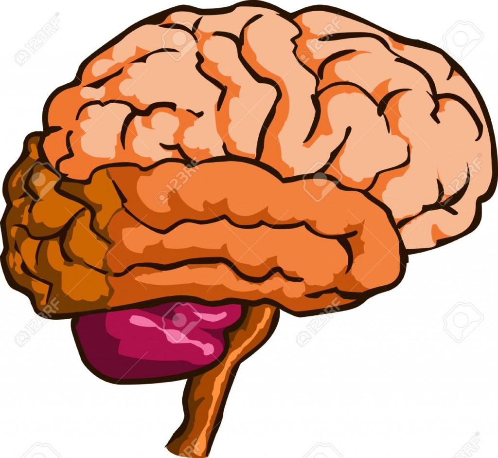 Brain Clipart Images.