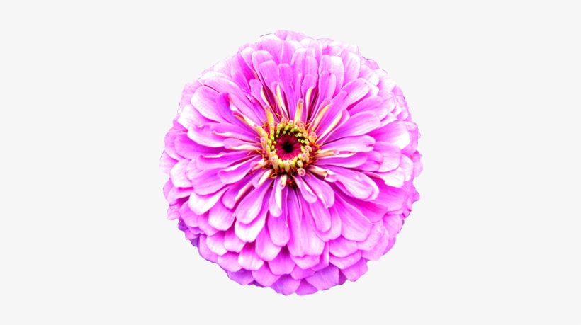 Flower Image Gallery Flower.