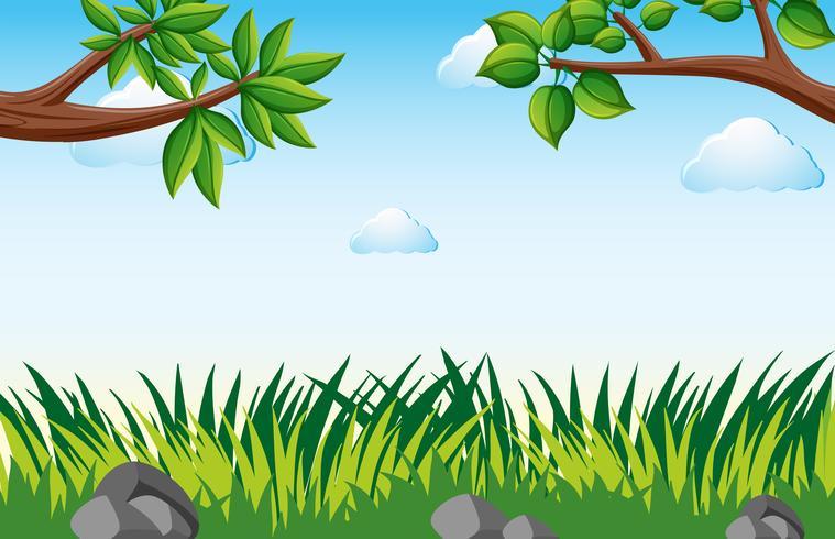 Scene with grass in garden.