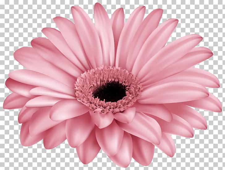 Transvaal daisy Pink , gerbera PNG clipart.