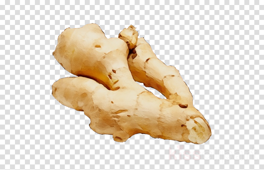 ginger food zingiber ingredient greater galangal clipart.