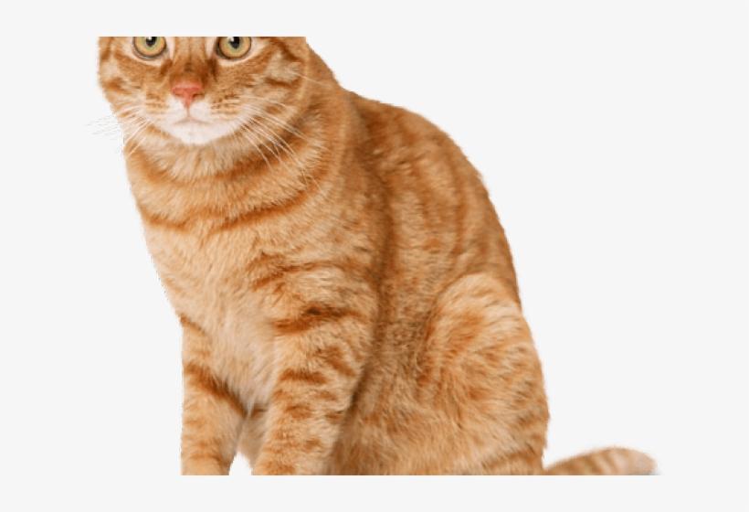 Tabby Cat Clipart Ginger Cat.