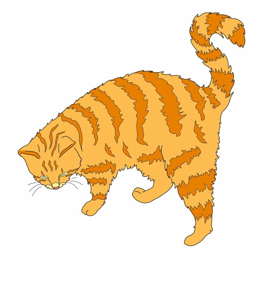 Cat Ginger Cat Cute Cat.