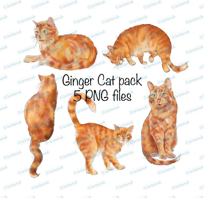 Cat clipart Ginger cat printable digital download. PNG Transparent  background Pencil watercolor sketches Commercial use. Scrapbooking..