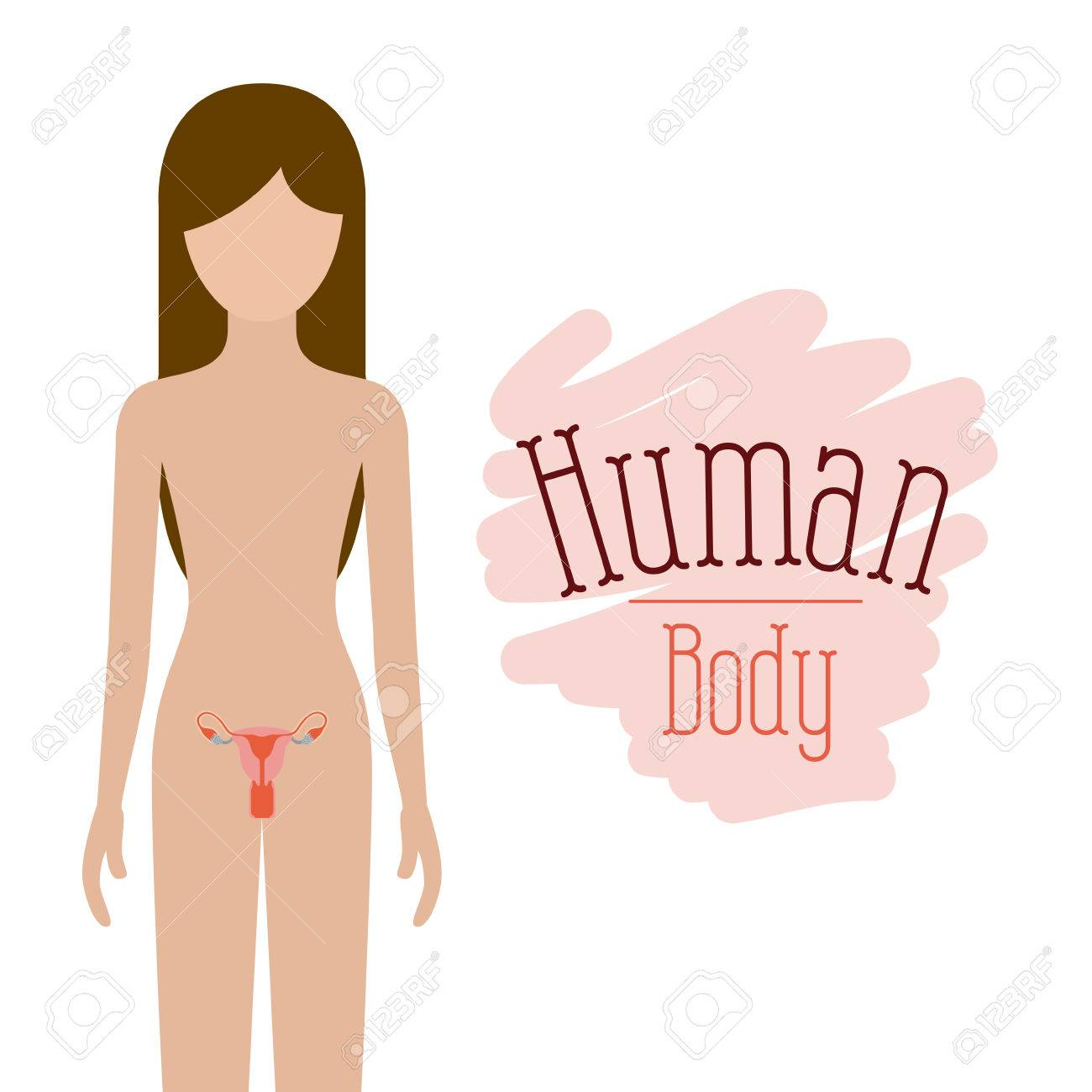 colorful silhouette female person with reproductive system human...