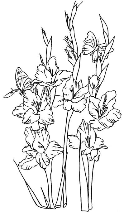 Clip art of gladiolus flowers done in black and white line.
