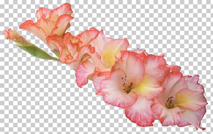 Gladiolus xd7gandavensis , Gladiolus HD PNG clipart.