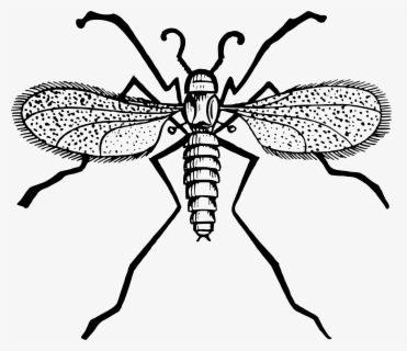 Free Gnat Clip Art with No Background.