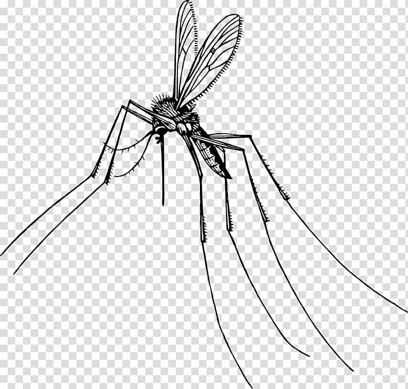Mosquito Insect Gnat Pest , mosquito transparent background.