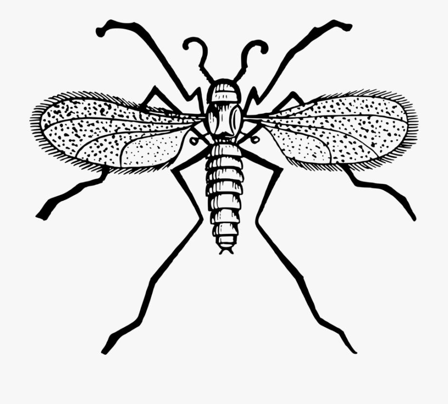 Mosquito Clipart Midge.