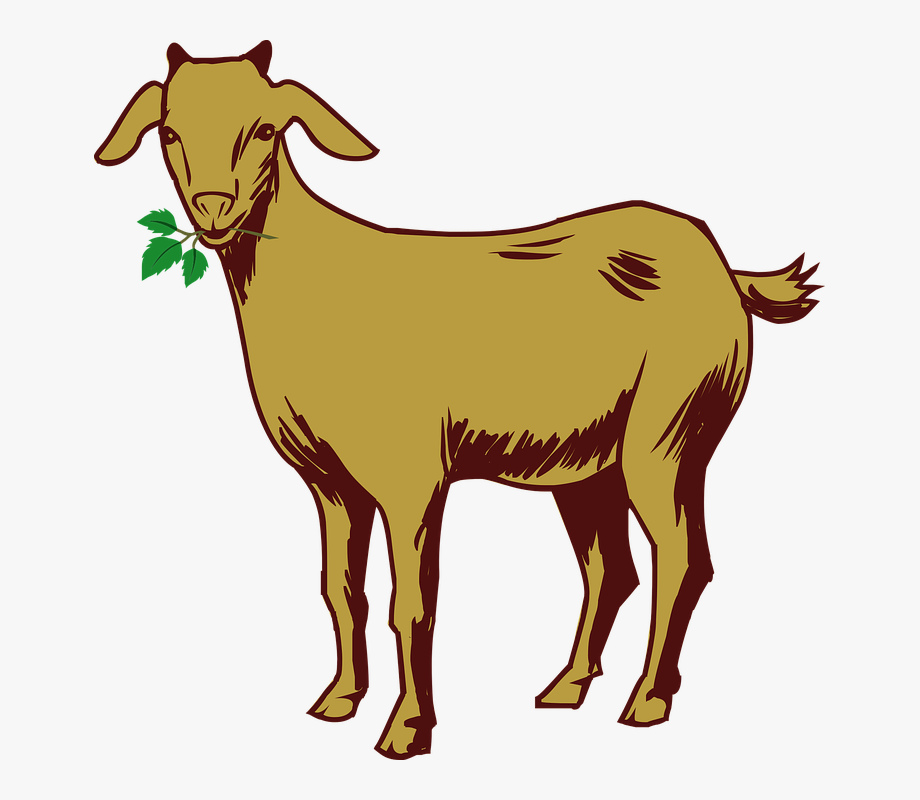 Billy Goat Clipart Chivo.