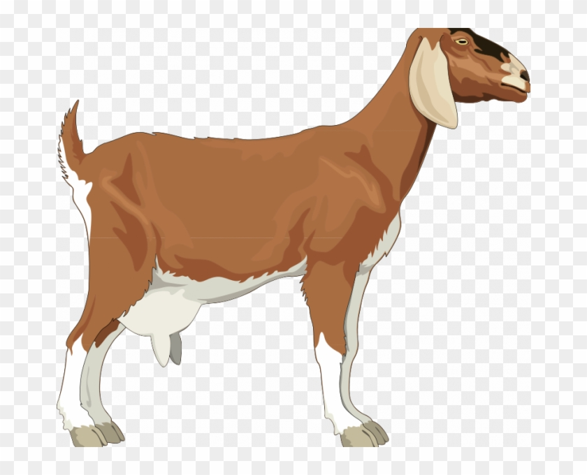 Goat Pictures Free Goat Free Vector 4vector Simple.