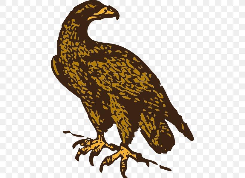 Golden Eagle Clip Art, PNG, 480x597px, Golden Eagle, Bald.