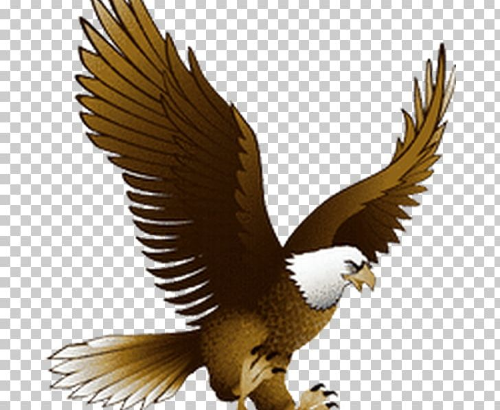 Bald Eagle Portable Network Graphics Golden Eagle PNG.