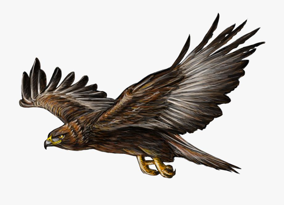 Golden Eagle Illustration, Cliparts & Cartoons.