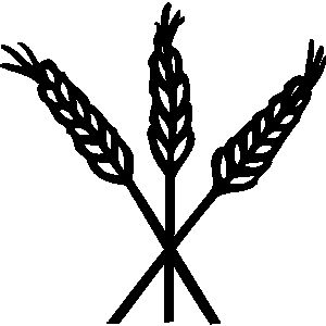 Pix For > Barley Grain Clipart.