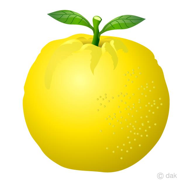 Grapefruit Clipart Free Picture|Illustoon.