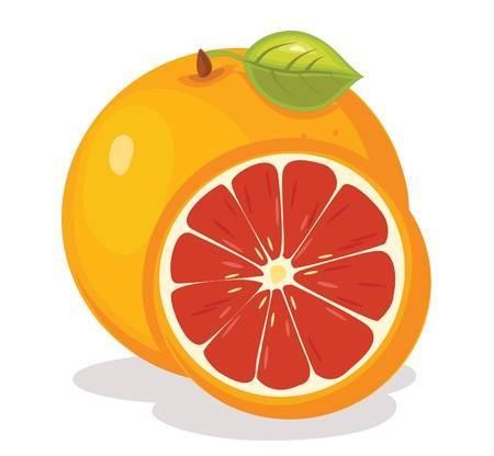 Grapefruit clipart » Clipart Portal.