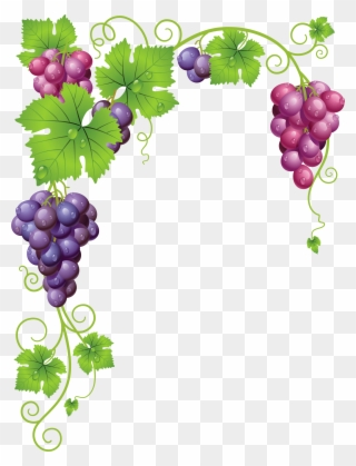 Free PNG Grape Vine Clip Art Download.