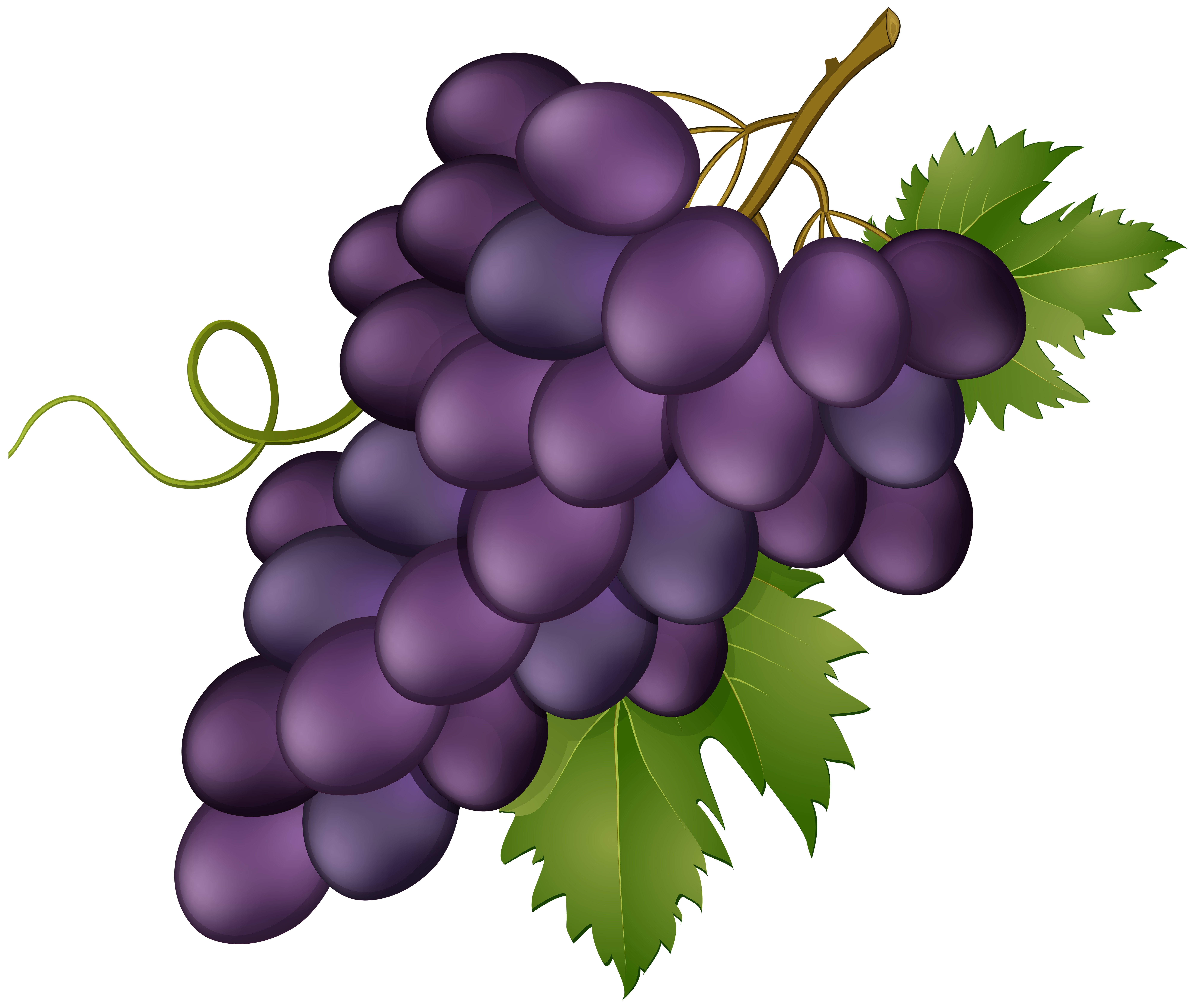 Grape Pink Transparent PNG Clip Art Image.