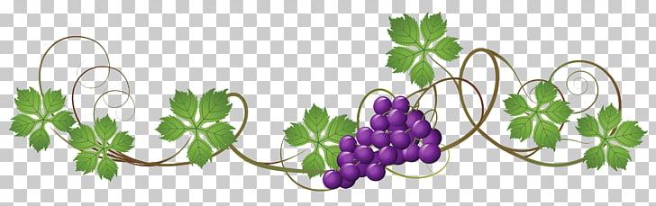 Grapevines Grape leaves , Vine s Transparent PNG clipart.