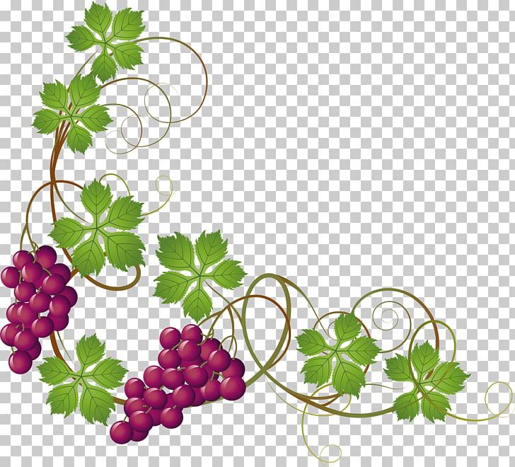 Common Grape Vine Grape leaves , Hand painted purple grapes.
