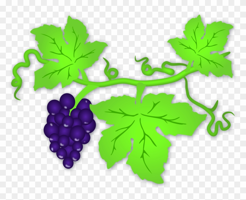 Grapes clipart grape plant, Grapes grape plant Transparent.