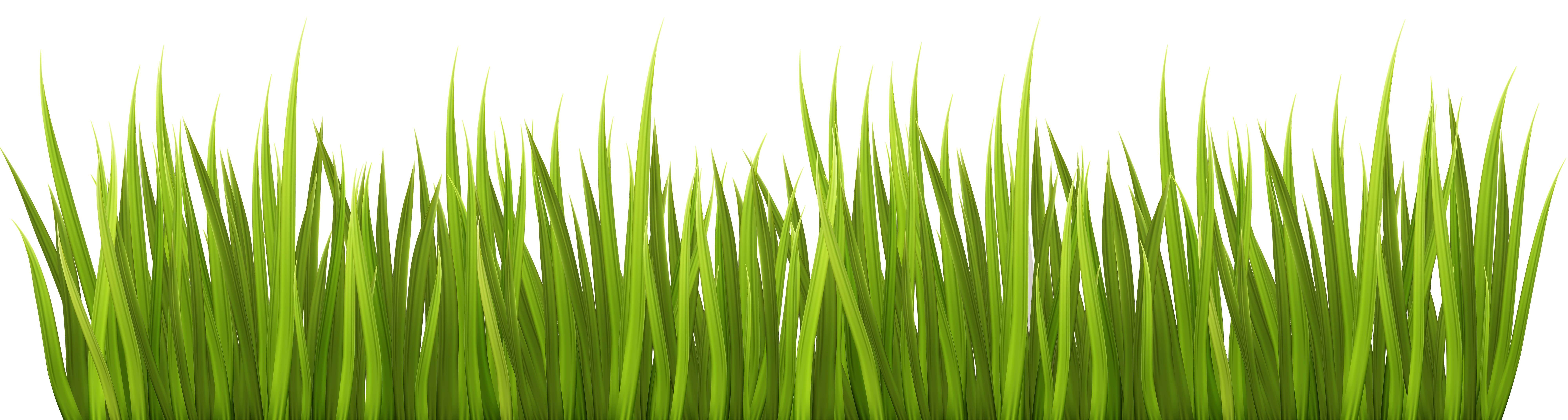 Spring Grass Clipart Clipground