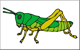 Clip Art: Insects: Grasshopper Color I abcteach.com.