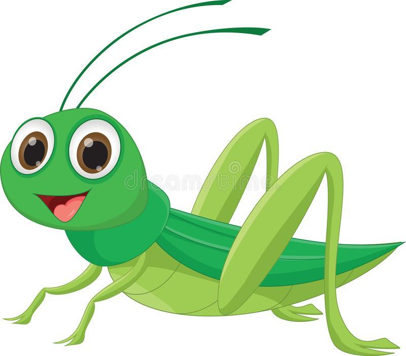 Grasshopper Stock Illustrations.