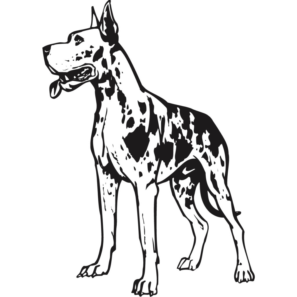 Great Dane Vector at GetDrawings.com.