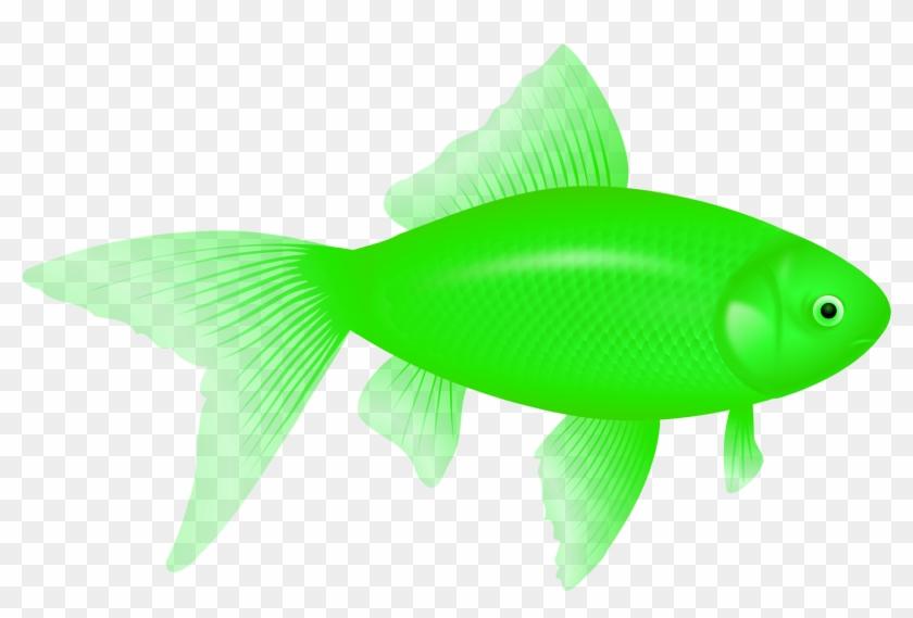 Fish Eight.