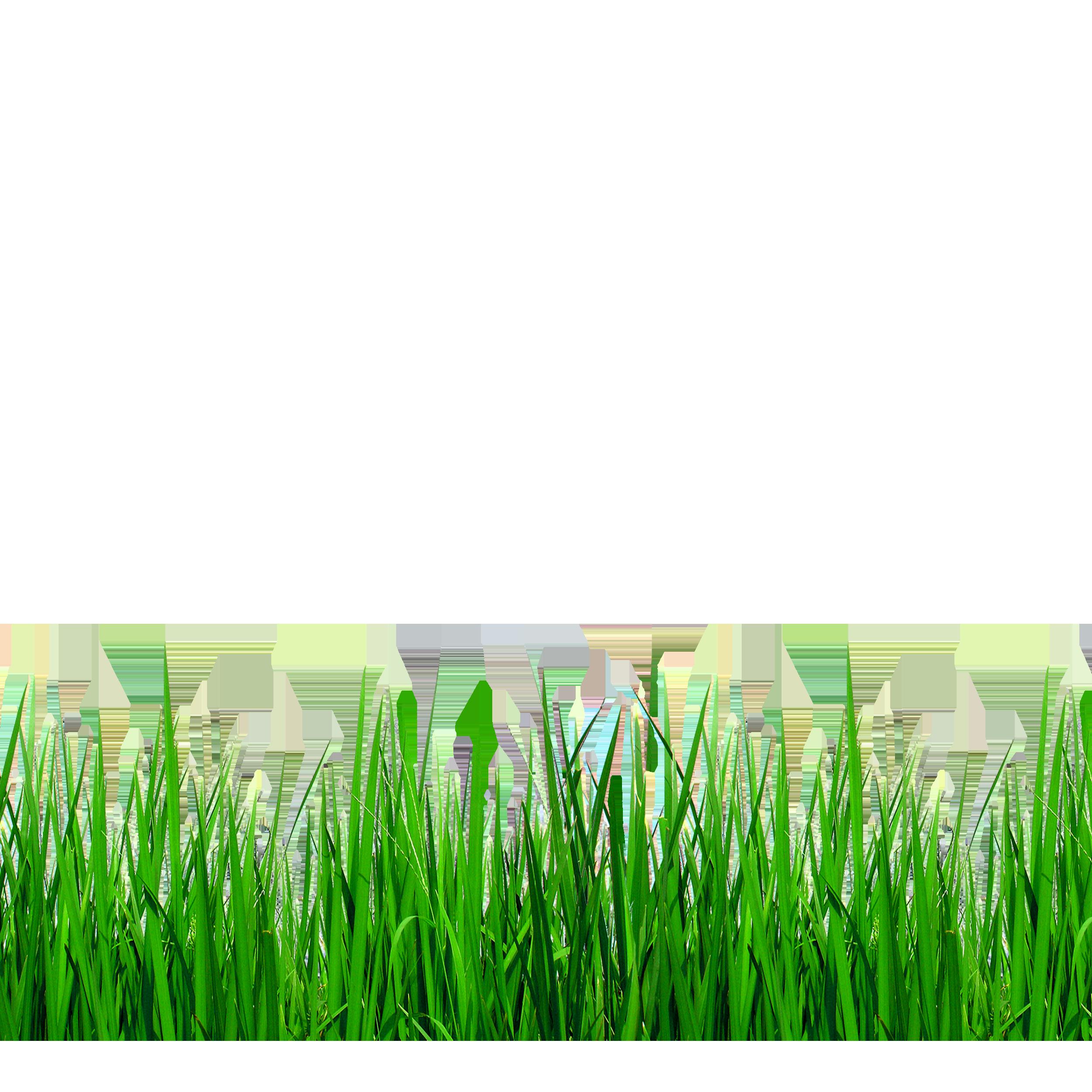 Download Grasses Clip art.