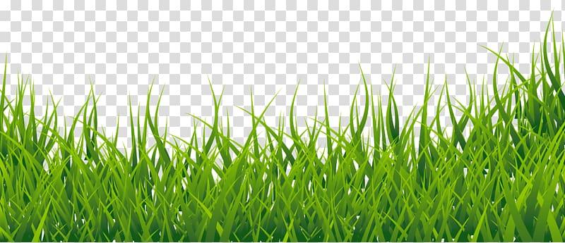 Thumbnail , Grass , green grass against blue background.