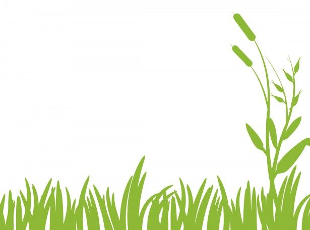Green grass clipart free stock photo public domain pictures.