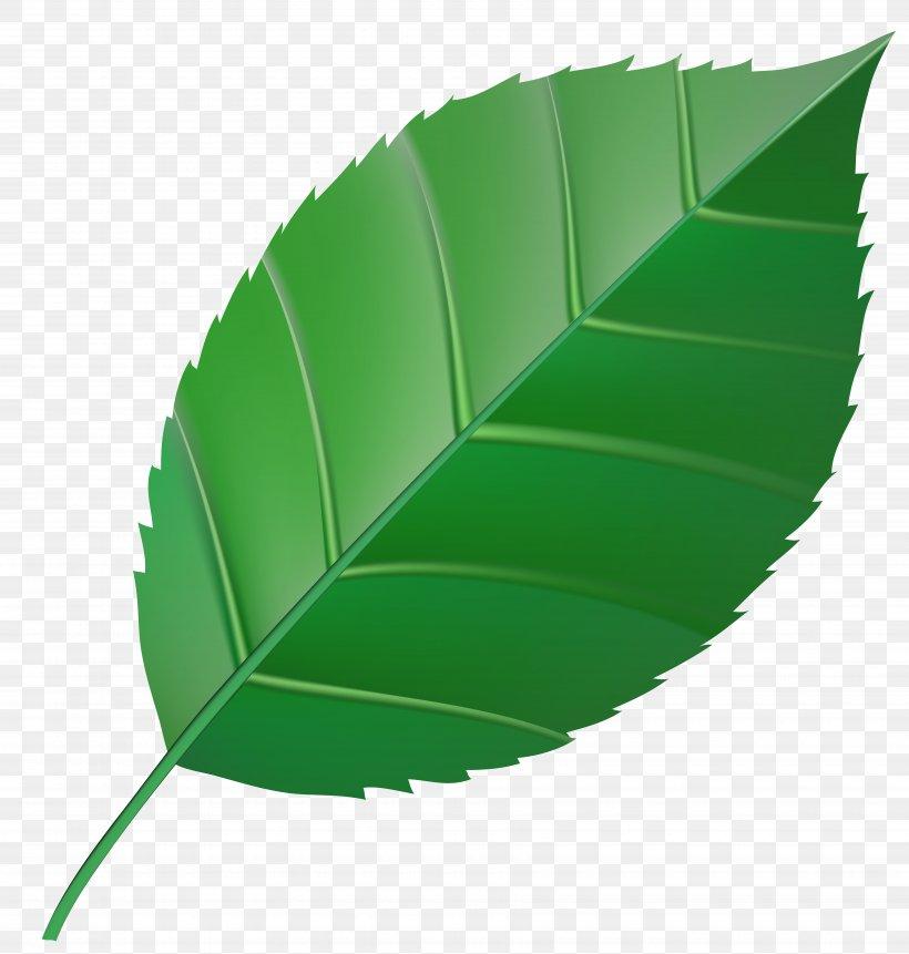 Autumn Leaf Color Green Clip Art, PNG, 7000x7352px, Leaf.