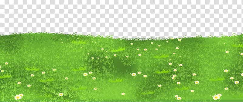 Lawn Grasses , Grass Ground with Daisies , bed of daisy.