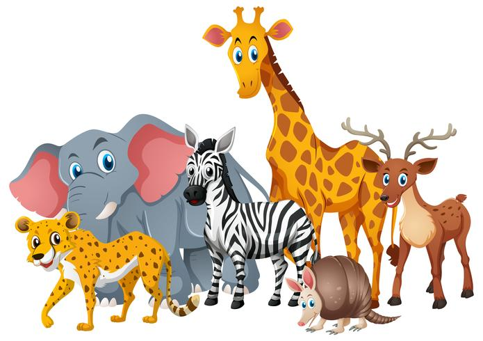 Wild animals together in group.
