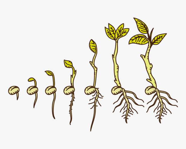 Hand Drawn Cartoon Plants Growing Up in 2019.