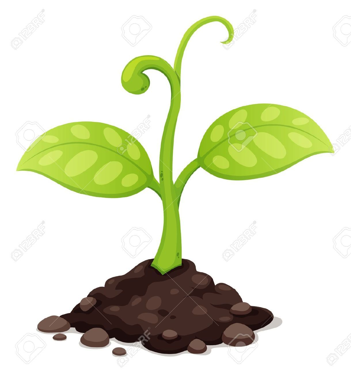 Seed Growing Images, Stock Pictures, Royalty Free Seed.