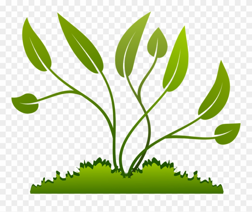 Branch Grow Growing Leaf Nature Png Image.