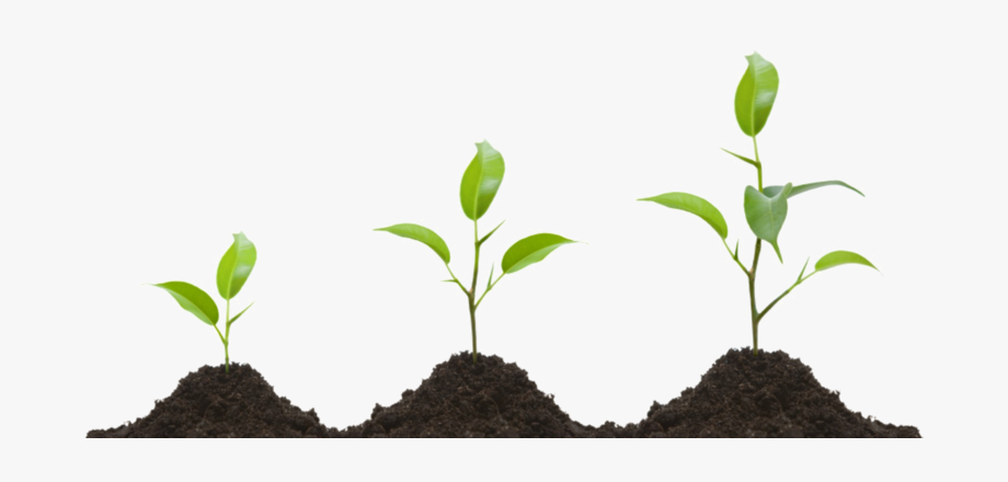 Growing Plant Png Transparent Image.