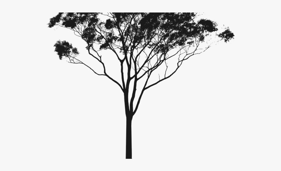 Eucalyptus Clipart Gum Tree.