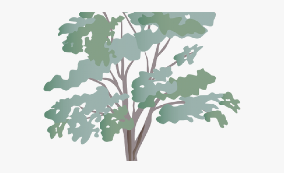 Eucalyptus Clipart Transparent.