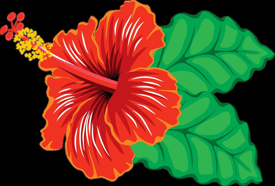 Tiki clipart gumamela flower, Tiki gumamela flower.