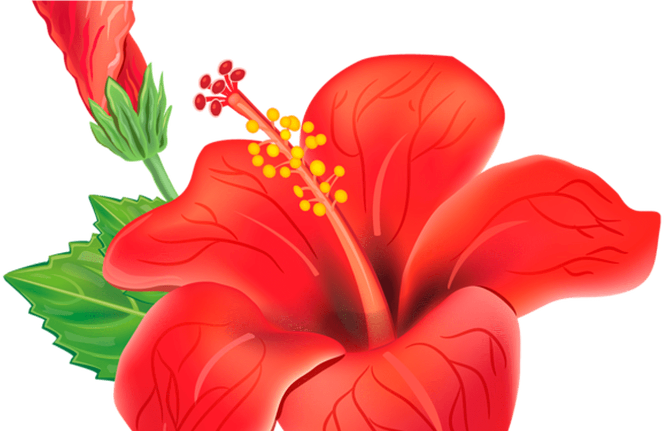 Download HD Red Exotic Flower Png Clipart Picture Moana.