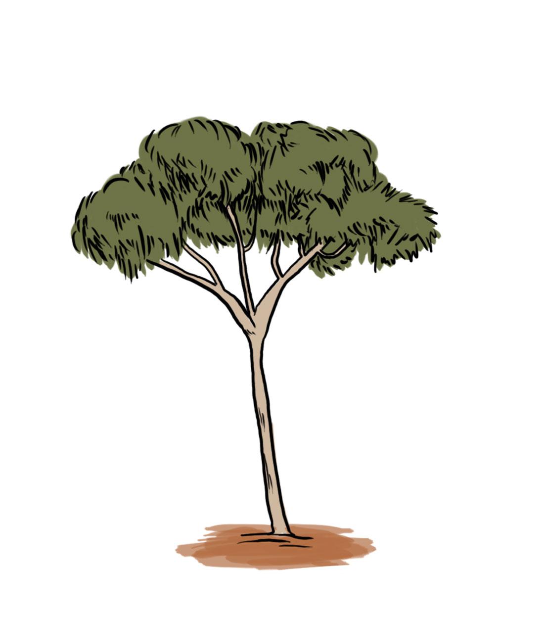 Gum Tree Clipart.