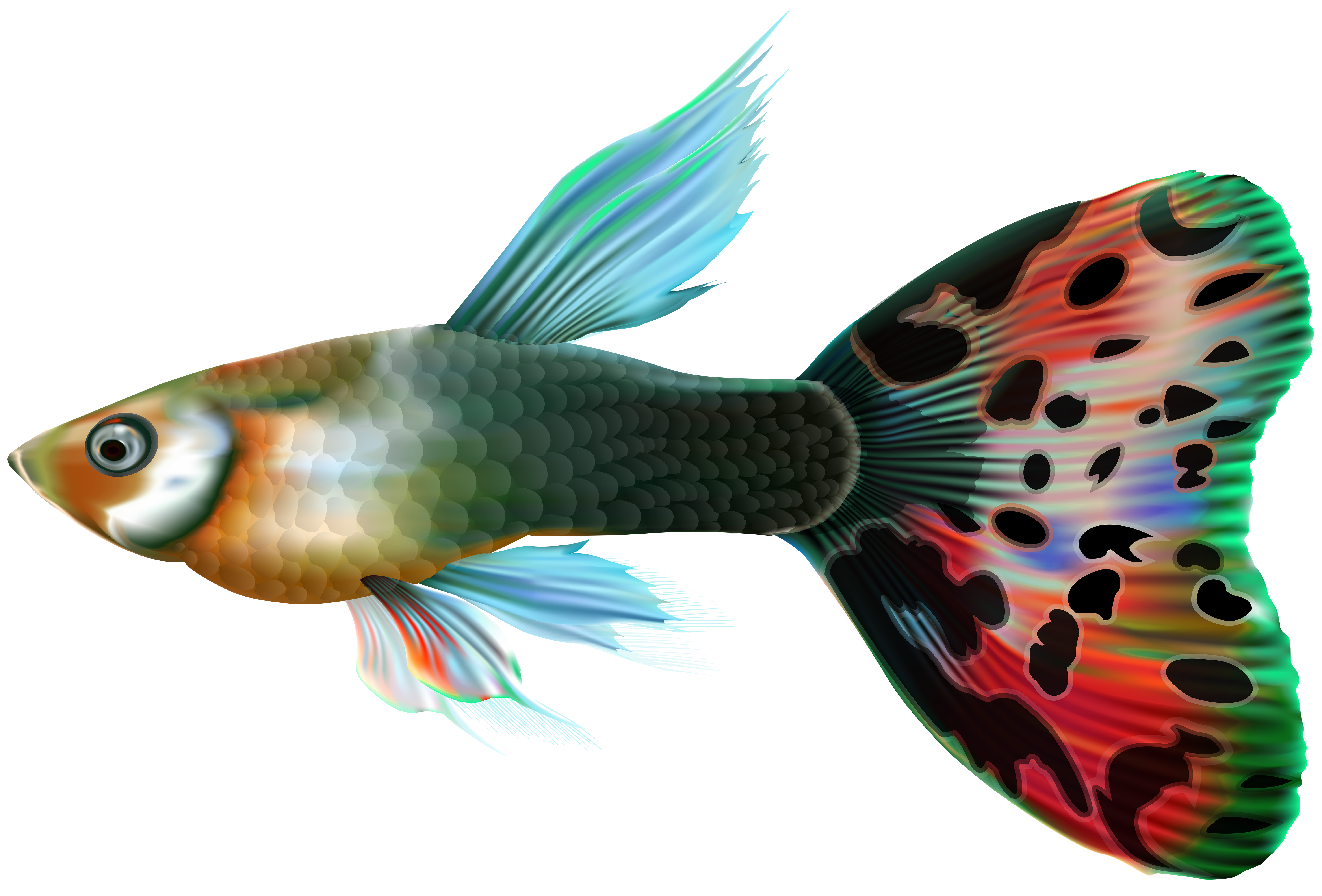 Male Guppy Fish PNG Clip Art.