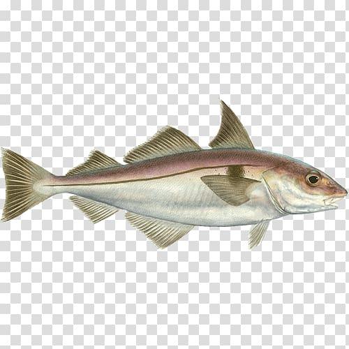 Cod Haddock Scrod Seafood Watch 09777, Fishing transparent.